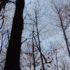 Vapaj za spas kestenovih šuma