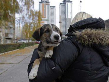 Teške optužbe protiv mlade pravnice: gdje nestaju donacije za napuštene pse