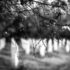 Izrugivanje nad žrtvama genocida