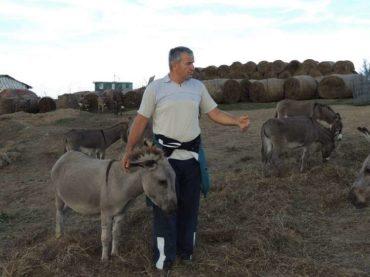 Krajišnik Izet Babić uzgaja autohtone bosanske magarce