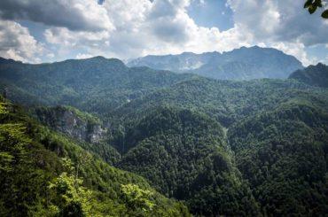 Kako zaštititi naših dvanaest prašuma