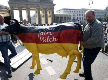 U Njemačkoj krave nikad ne spavaju