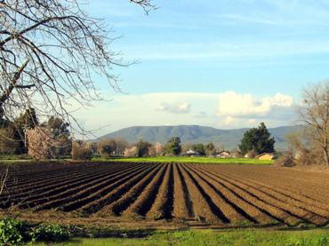 Ojačati poljoprivredu: 15 miliona KM za proizvodnju hrane
