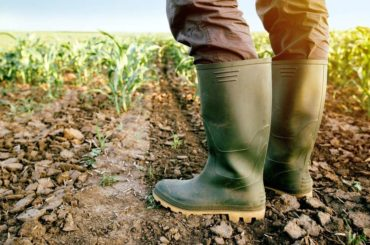 Pandemija i ekonomska izolacija: Ovisnost o uvozu hrane mora prestati