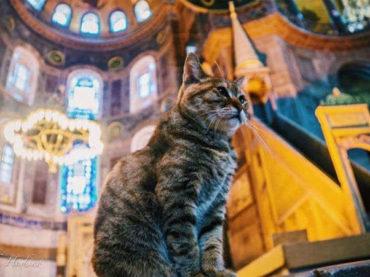 Svijet napustila mačka Gli, simbol Istanbula i Aja Sofije